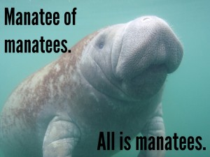 LIKE FOR THE SAKE OF HUGEMANATEES! IMAGE: USFWS-Endangered-Species-CC-BY-2.0
