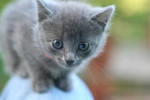 Girl Kitten the First by Waldo Jaquith CCBYSA2