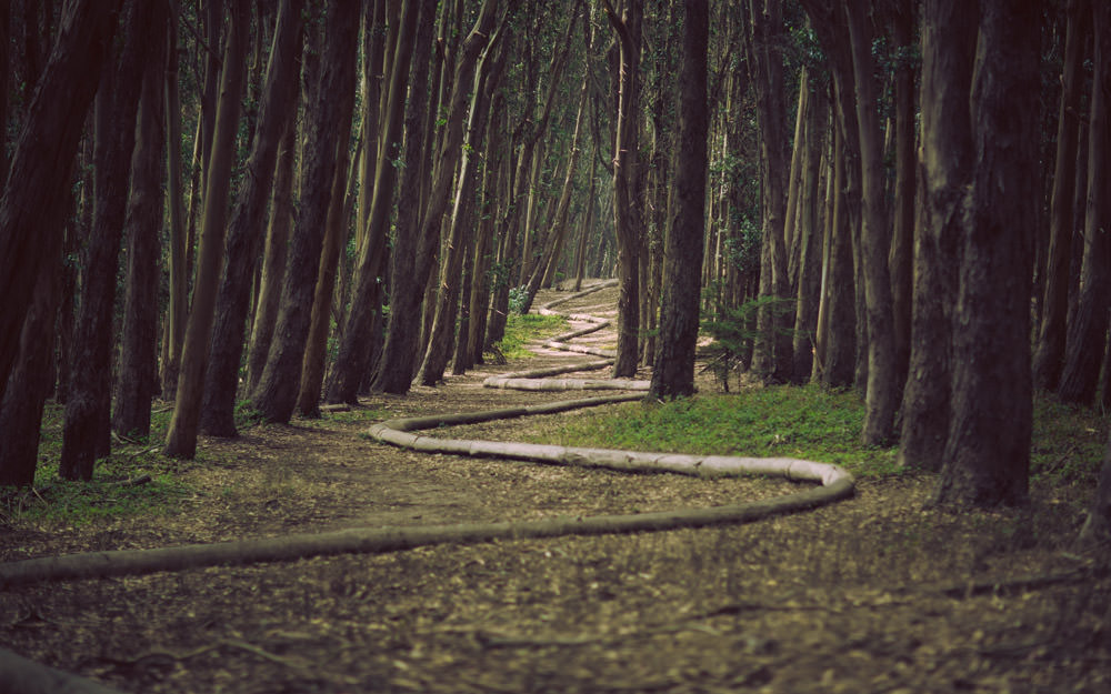 forest-path-pipe-961