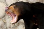 Bears Kill